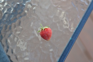 first strawberry!